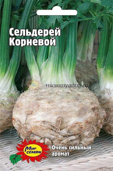 Выращивание корневого сельдерея на семена 698